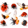 Collection of Seven-spot ladybirds - Stock Photo