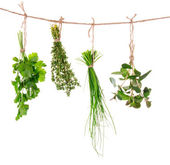 Fresh herbs hanging — Stock Photo