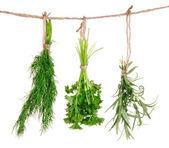 Fresh herbs hanging — Stock Photo