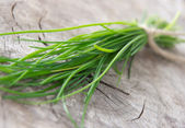 Fresh chive — Stock Photo
