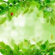 Foto de Stock  : Fresh green leaves