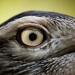 Bird eye — Stock Photo #34727477