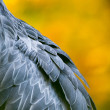 Stock Photo: Shoebill, Abu Markub