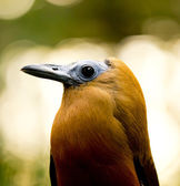 Exotisk fågel — Stockfoto