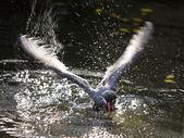 Sea bird in a motion — 图库照片