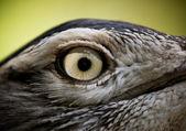 Bird eye — Stock Photo