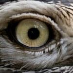 Bird eye — Stock Photo #34747735