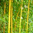 Bamboo — Stock Photo #35142941