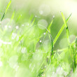 Green grass texture with water drops. — Stock Photo #36080803