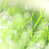 Green grass texture with water drops. — Stock Photo
