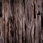 Texture of bark wood — Stock Photo #38698417
