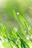 Fresh green grass with water droplet — Stock Photo