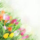 Beautiful bouquet of tulips. — Stock Photo