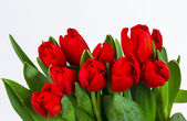 Beautiful bouquet of tulips. — Stock Photo