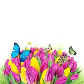 Piękny bukiet tulipanów. — Zdjęcie stockowe