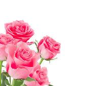 Přírodní růžové růže pozadí — Stock fotografie