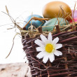 Easter colored eggs on hay — Stock Photo #42856535