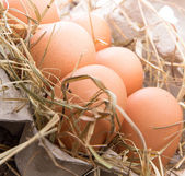 Fowl eggs in paper basket — Stock Photo