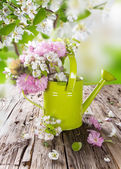 Spring blossoms background — Stock Photo