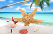 Sea shells and starfish with sand — Stock Photo