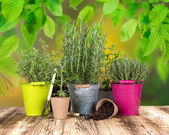 Ahşap masa üzerinde bahçe aletleri — Stok fotoğraf