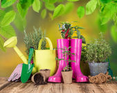 Outdoor gardening tools and herbs. — Stock Photo