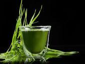 Heathy green superfood chlorella and young barley — Stock Photo