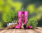 Gartengeräte auf holztisch — Stockfoto