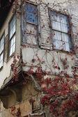 Hiedra de la antigua muralla de la casa — Foto de Stock