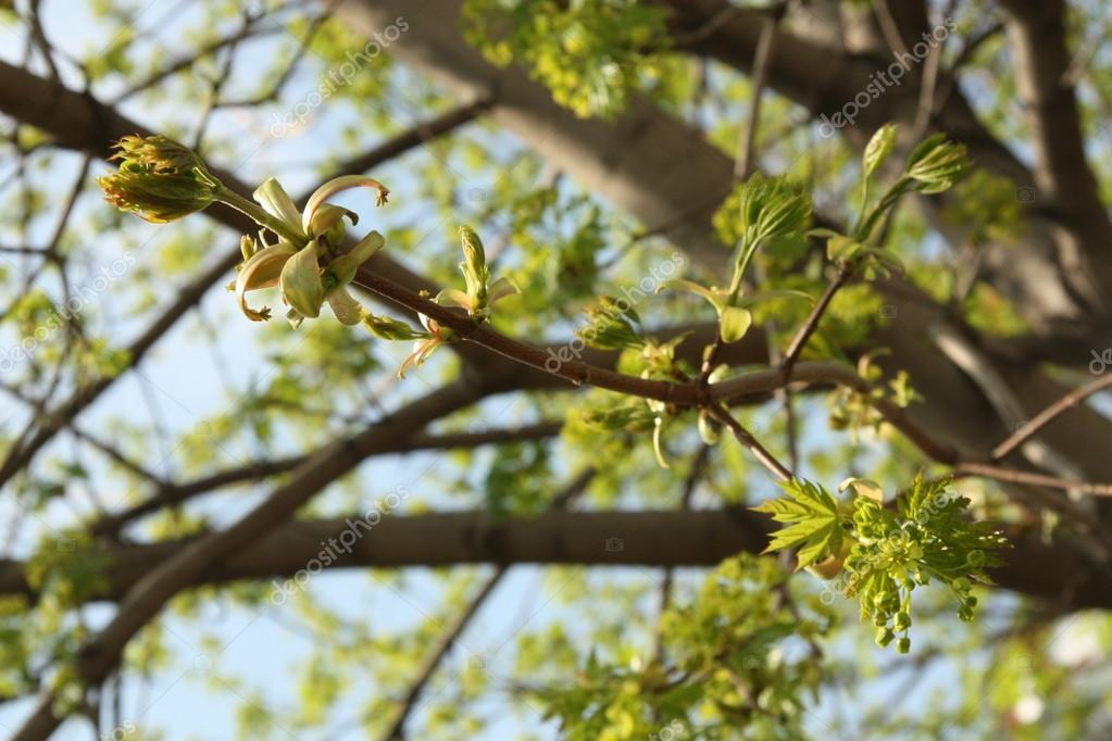 Young spring green leaves over blue sky — Stock Photo #13179881