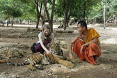 Young tourist girl in The Tiger Temple — Stock Photo
