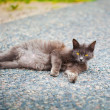 Stock Photo: Dark cat with yellow eyes lying on the ground