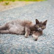 Dark cat with yellow eyes lying on the ground — Stock Photo #27813889
