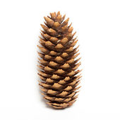 Fir-cone on the white isolated background. — Stock Photo