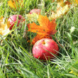 Fallen red apples and leaves in green grass — Stock Photo #13656442