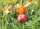 Rote äpfel und blätter in grünem gras gefallen — Stockfoto