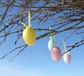 Easter eggs hanging on branches — Stock Photo