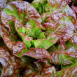 red lettuce — Stock Photo