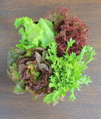 Green and red lettuce — Stock Photo