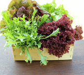 Green and red lettuce in box — Stock Photo
