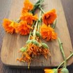 Fresh and dried herbal calendula flowers — Stock Photo #29435967