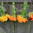 Fresh tagetes,marigold, nasturtium,calendula  hanging for drying  — Stock Photo