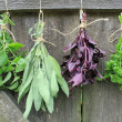 Fresh herbs hanging for drying — Stock Photo #31802373
