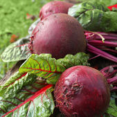 Fresh organic beets — Stock Photo