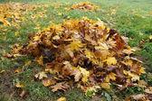 Pile fallen autumn leaves — Stock Photo