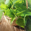 Freshly stinging nettles in basket — Stock Photo