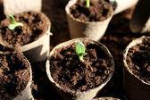 Young fresh seedling — Stock Photo