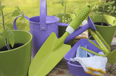 Gardening tools and seedling — Stock Photo