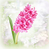 Card with Hyacinth Flower on pastel background — Stock Photo