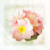 Tarjeta con capullos de flores bajo el rocío cae sobre fondo de colores pastel — Foto de Stock